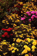 flower color garden