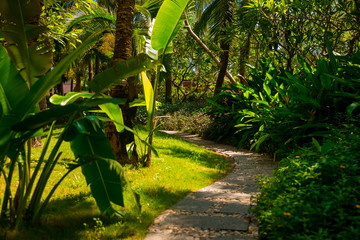 Trail in the tropical jungle in the afternoon. Tropic in the park. Stone road in forest