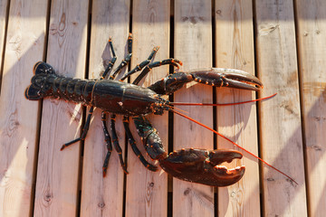fresh lobster lying on sundeck