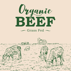 Hand drawn of cattle with free range beef label