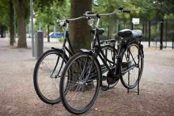 Two city bikes near the tree in the park