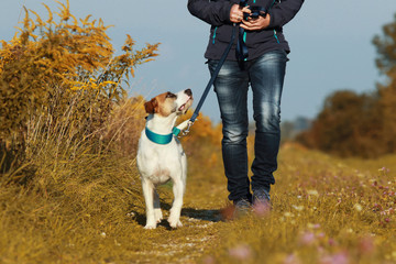 Sportive woman walks her dog in autumn