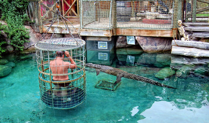 Adrenaline. Man in a pool with crocodiles. Man stands inside of a cage with large holes & plunges into water with crocodiles. Stunning African adventure. Gator show.