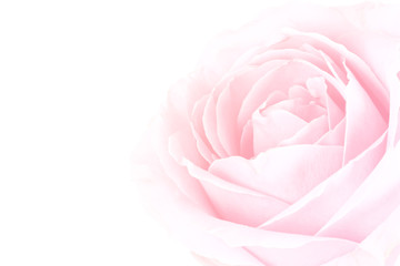 gentle background of pink rose