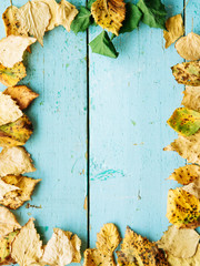 Frame from vivid colorful moody autumn background with green, red, yellow fallen leaves on blue wooden plank table. Copy space, horizontal top view, natural seasonal pattern. Thanksgiving Day concept.