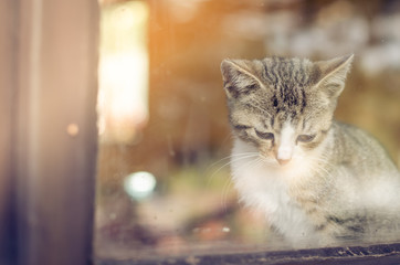 cat behind window waiting