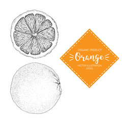 Orange vector illustration. Hand-drawn design element. A fruit drawn in vintage style