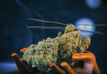 Cannabis nugs and dragonfly isolated over black with smoke and bubbles, medical marijuana concept