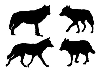 Vector wolves collection in different positions on white background.