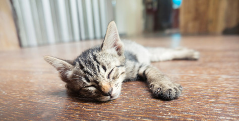 Lazy street little tabby kitten.  Cat  laying on wooden floor with Adorable serious funny face .