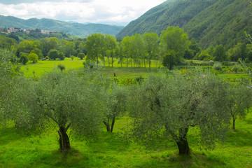 Paesaggio con ulivi