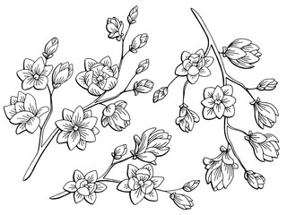 Magnolia flower graphic black white isolated sketch illustration vector