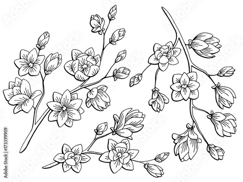 Magnolia flower graphic black white isolated sketch illustration magnolia flower graphic black white isolated sketch illustration vector mightylinksfo