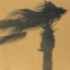 Shadow of palm tree on a windy day