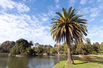 Palm next to lake landscape
