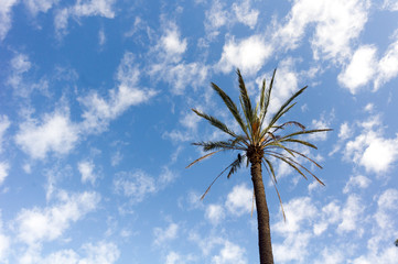 Bird in palm tree