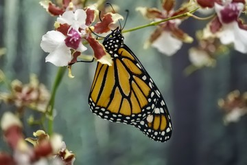 Tropic Butterfly
