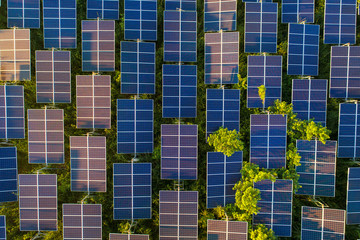 Top view of solar panels (solar cell) in solar farm with green tree and sun lighting reflect .Photovoltaic plant field. Fotoväggar