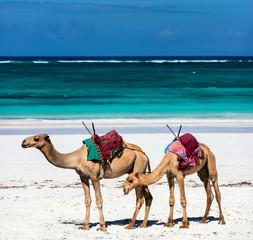 Beautiful tropical beach in Kenya