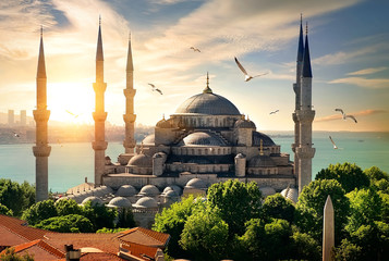Seagulls over Blue Mosque