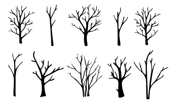 Naked trees silhouettes set. Hand drawn isolated illustrations.
