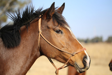 horse in rope halter