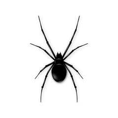 Black spider isolated on white background. Realistic vector illustration of black spider.
