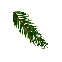 Naturalistic colorful fir branch. Vector Illustration.