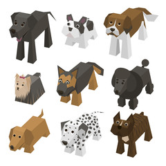 Vector different breed isometric dogs