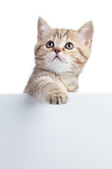 Cat kitten hanging over blank posterboard for message
