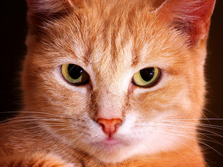 serious ginger cat full face portrait, closeup, toned, lomo effect
