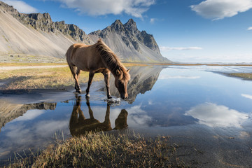 Magica Islanda / un cavallo si riflette nel favoloso paesaggio