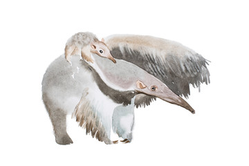 Watercolor illustration of anteater family mother and a baby