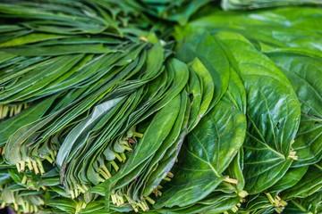Green betel leafs