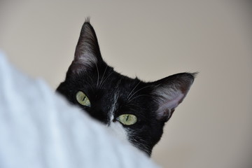 orecchie di gatto Fototapete