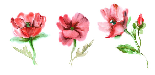 Red Poppies. Watercolor Illustration.