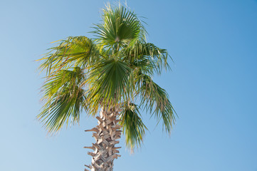 palm tree with green leaves on blue sky background