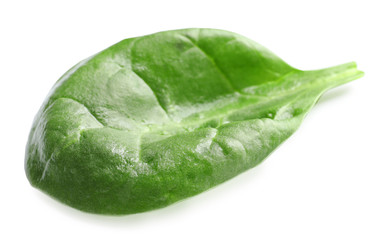Fresh spinach leaf on white background
