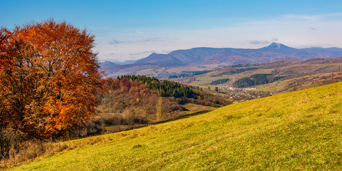 tree on hillside in mountainous autumn countryside