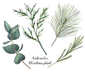 Watercolor Christmas plant. Hand painted rosemary, eucalyptus, cedar and fir branches isolated on white background. Floral botanical clip art for design or print. Holiday illustration