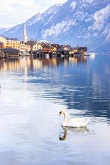 Beautiful view of a white swan with a background of Hallstatt alpine village on Hallstattersee or Lake Hallstatt, Hallstatt, Austria, Europe.