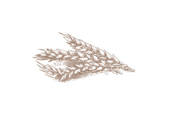 Three spikelets of wheat