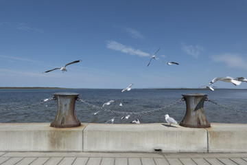 A group of seagulls flying over the pier onto the ocean.