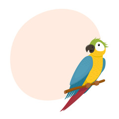 Cute macaw, ara parrot sitting on tree branch, exotic tropical bird and place for text, cartoon vector illustration isolated on white background. Cartoon style macaw, ara parrot sitting on a branch