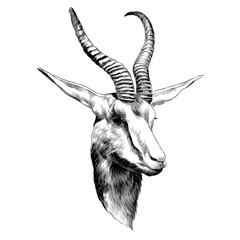 DOE sketch vector graphics monochrome black-and-white drawing head