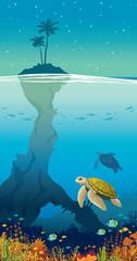 Island, palm, sky, underwater sea wildlife - coral, fish, turtle.
