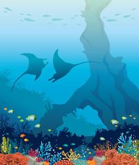 Mantas, coral reef, sea underwater nature.