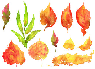 Collection of hand drawing watercolor yellow autumn birch leaves