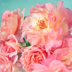 Close-up floral composition with a pink roses .Many beautiful fresh pink roses .