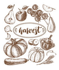 Ink hand drawn set of vegetables and fruits - cherry tomatoes, zucchini, pumpkin, patisson, pear, apple. Autumn harvest elements collection with brush calligraphy style lettering. Vector illustration.